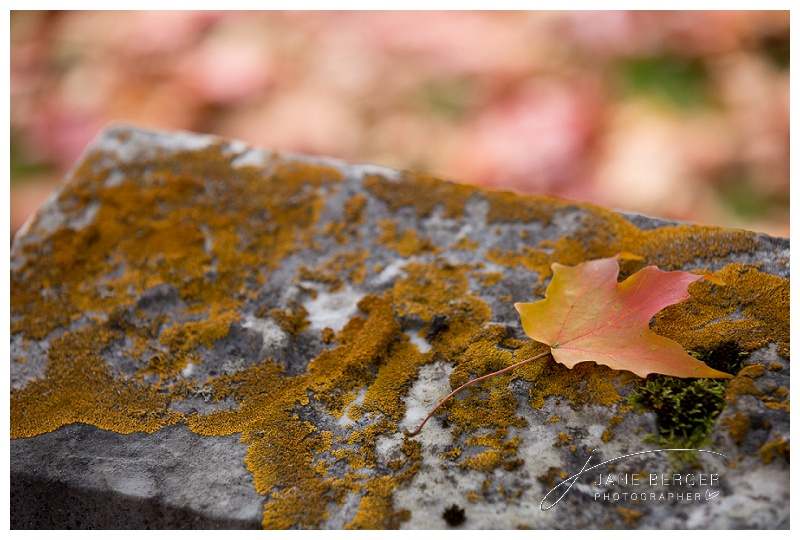 fall leaves_0001