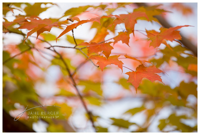 fall leaves_0010