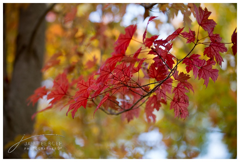 fall leaves_0013