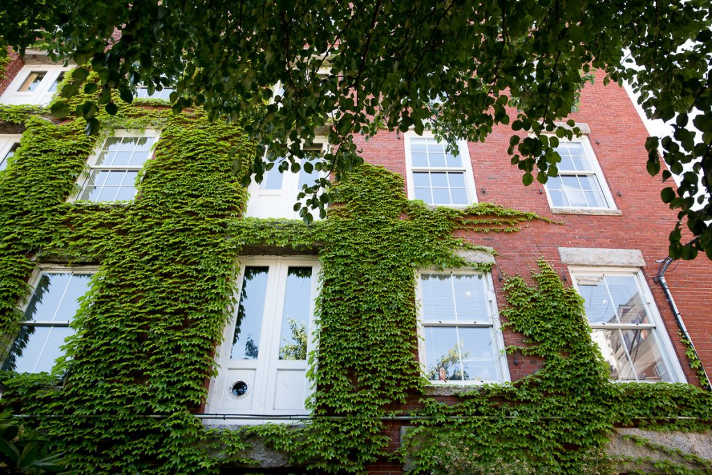 25/52 portland-building-maine-ivy