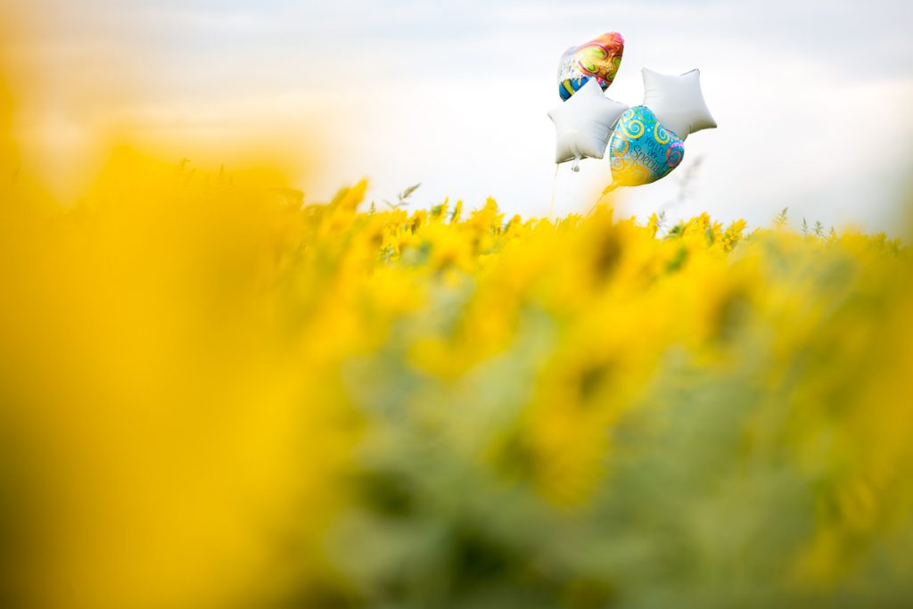 38/52 sunflower-field-balloons-newburyport