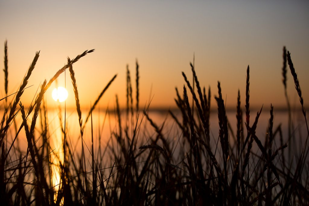 42/52 sunrise-lincolnville-maine-reeds-silhouette