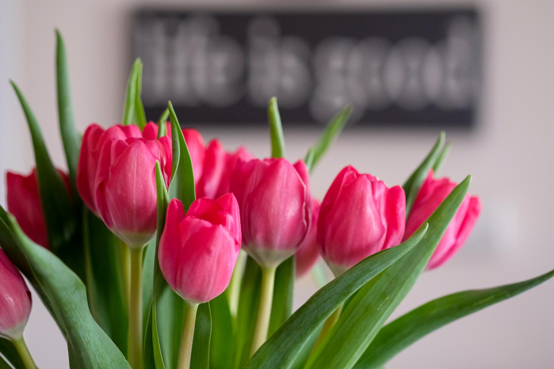 tulips. flowers