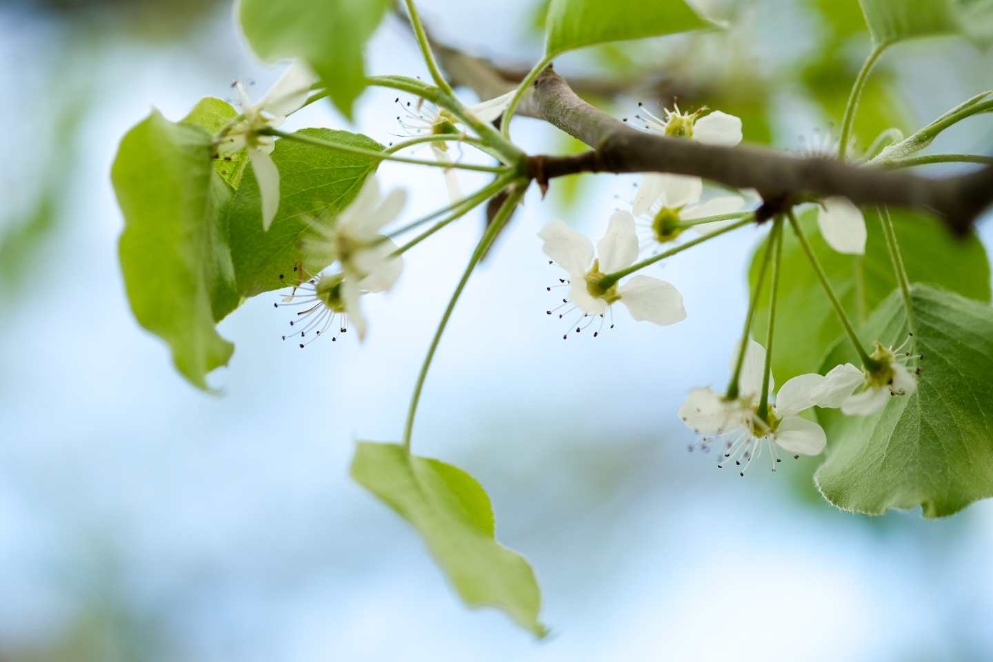 white flowering tree spring