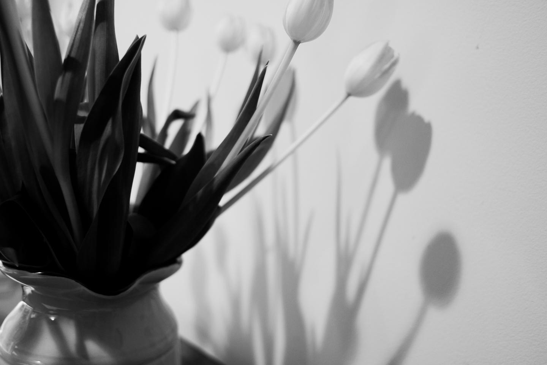 tulip shadow